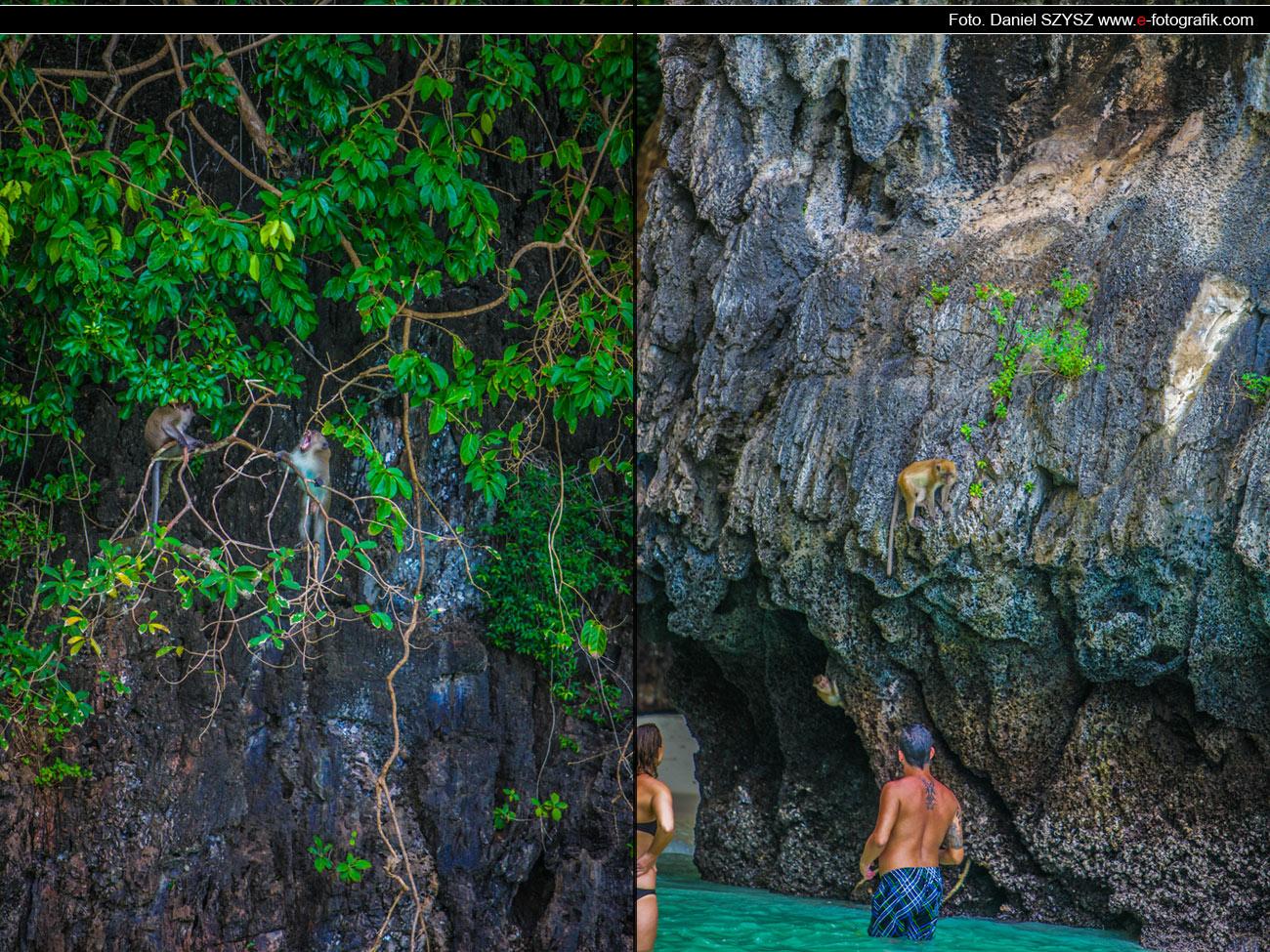 Małpy na Phi Phi - Tajlandia