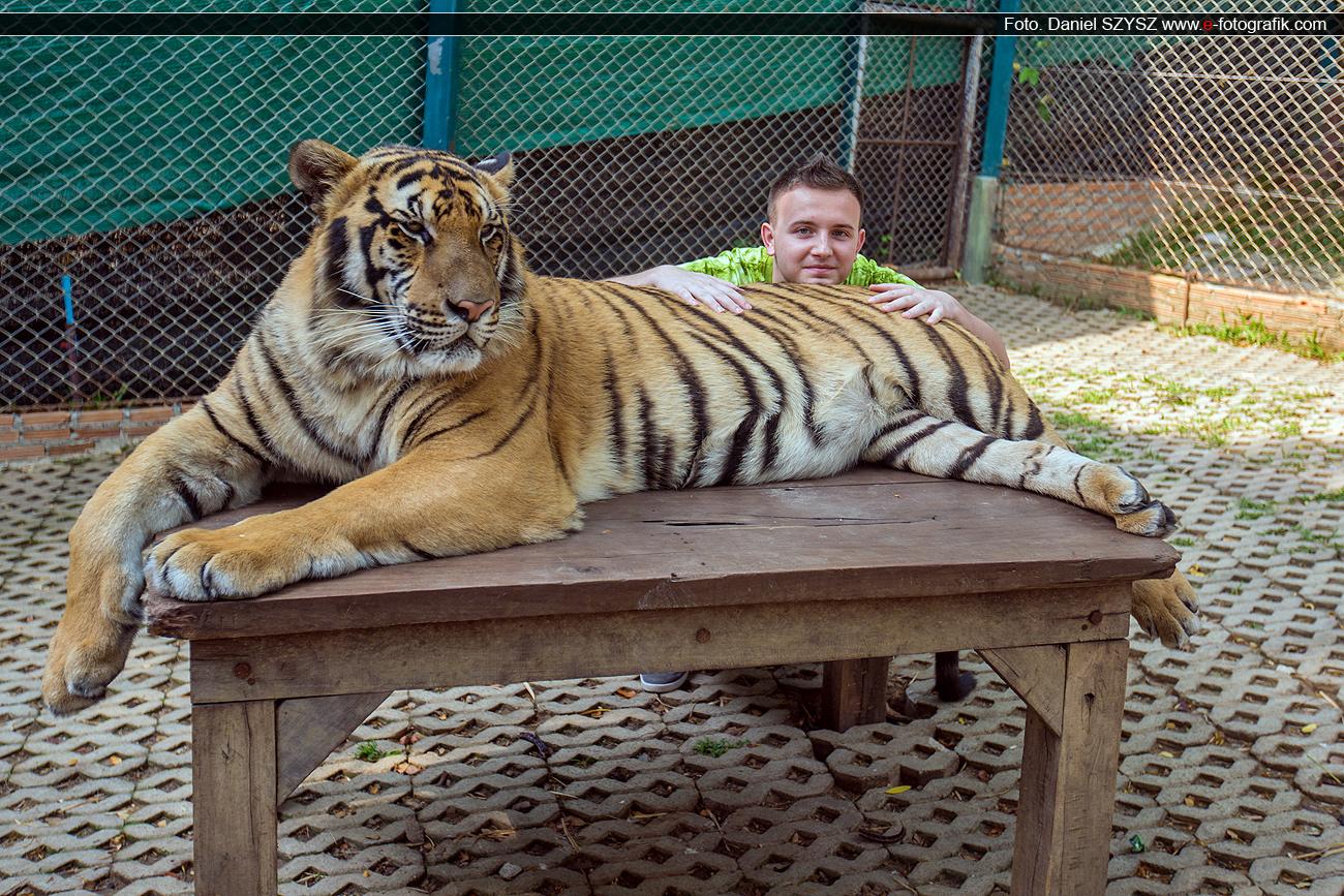 kacper-szysz-taklandia-tiger