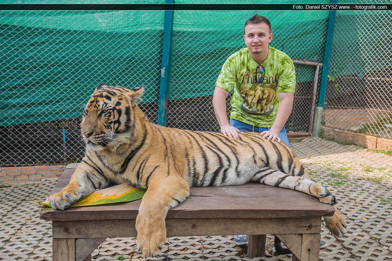 kacper-tygrys-szysz-tajlandia