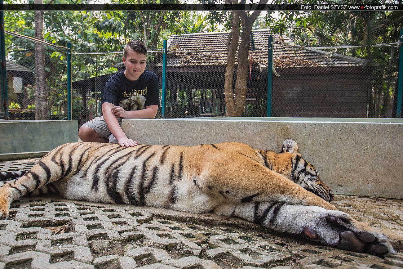 kajetan-tygrys-szysz-tajlandia