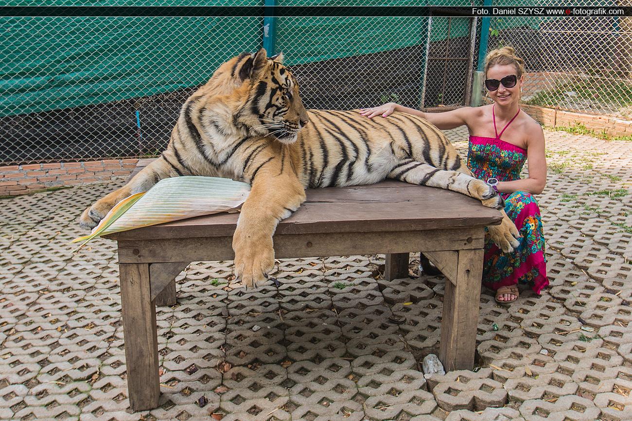 martyna-tygrys-azja-szysz-tajlandia