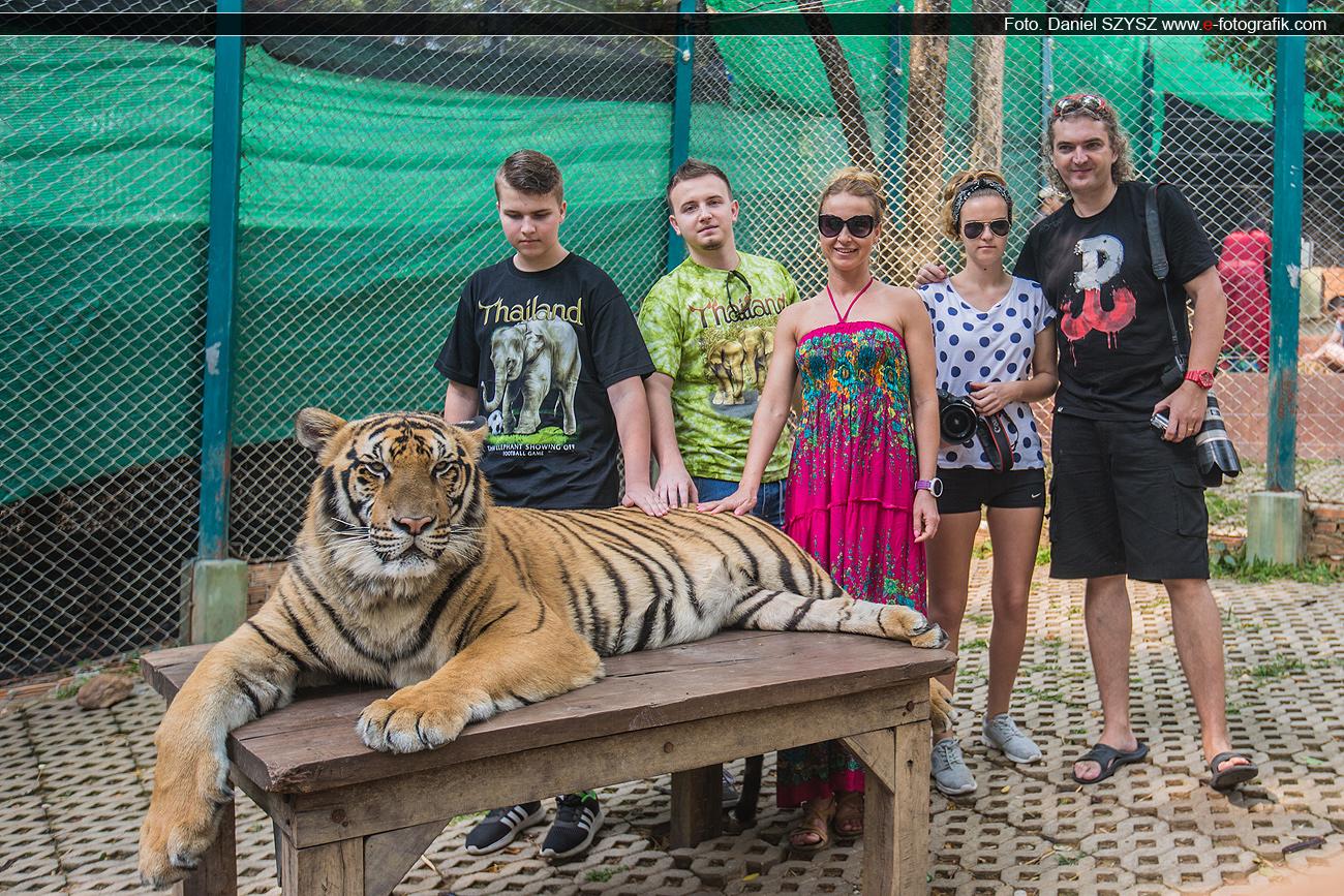 szysz-rodzinka-u-tygrysów