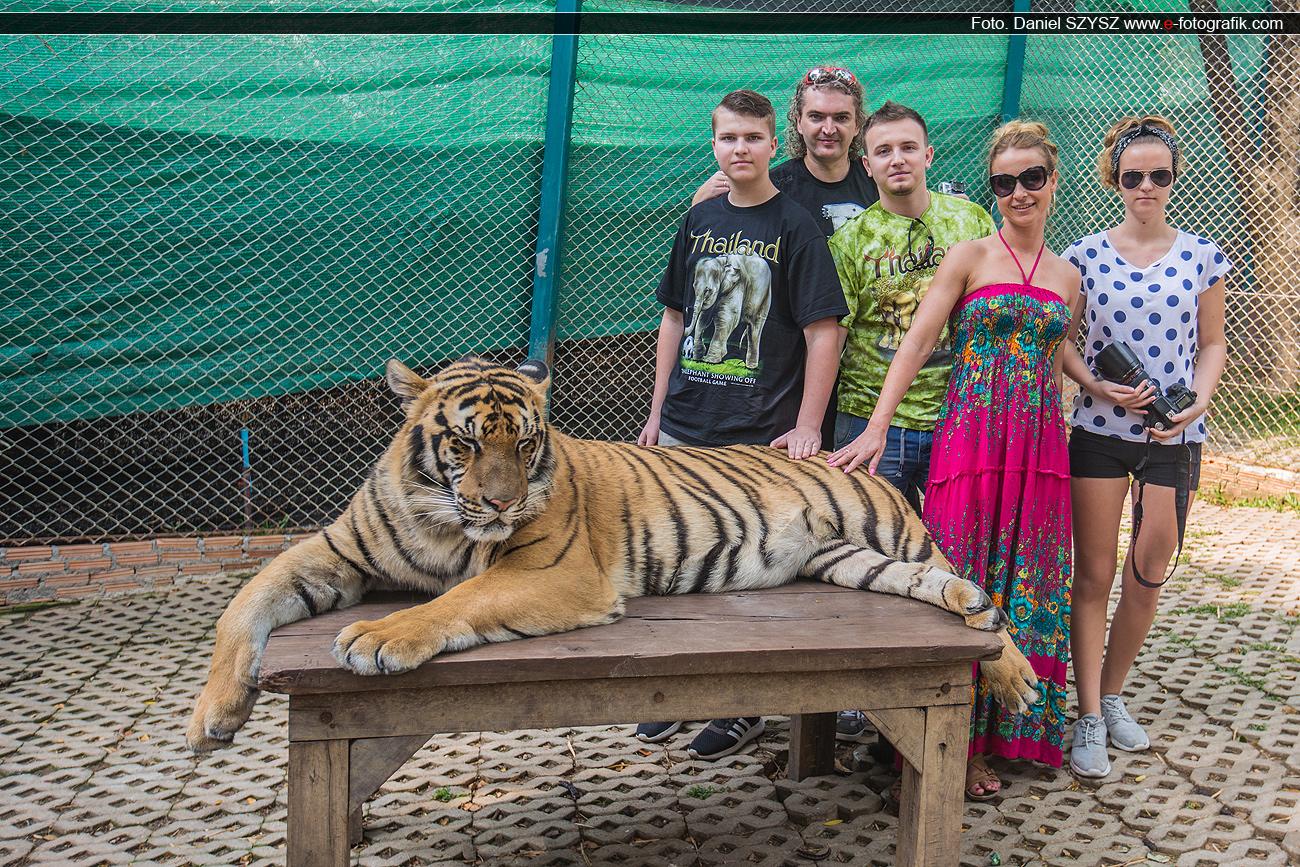 szysz-tygrys-rodzina