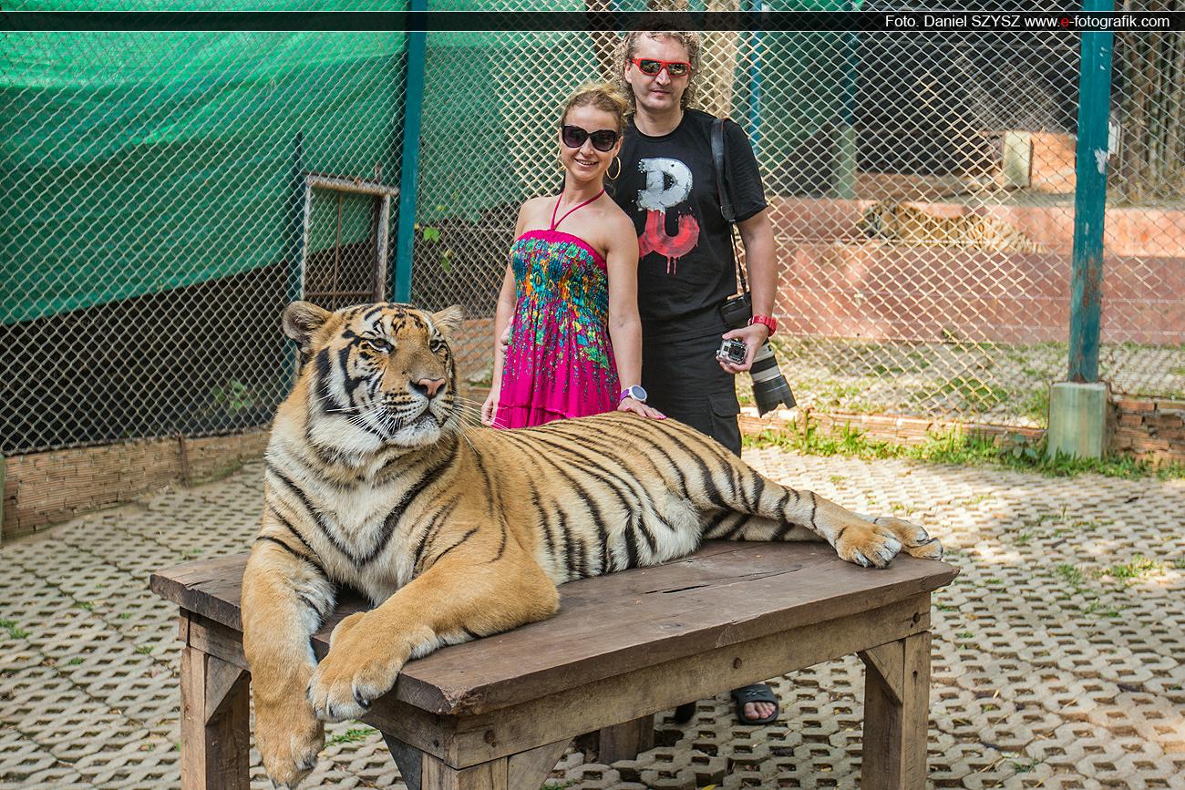 tiger-szysz-mzrtyna-daniel-tajlandia