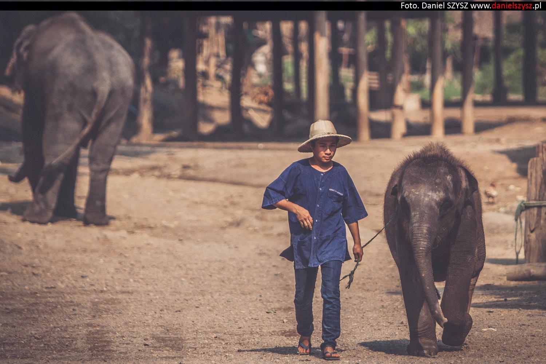 tajlandia-chiang-mai-karmienie-sloni-14