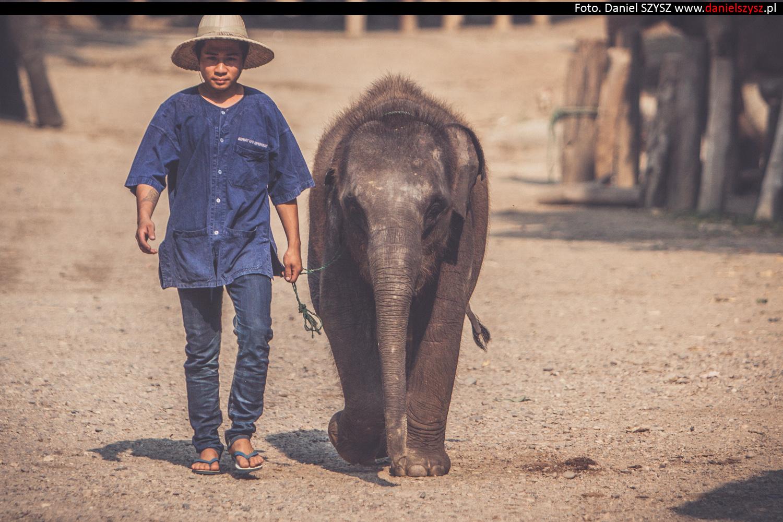 tajlandia-chiang-mai-karmienie-sloni-17