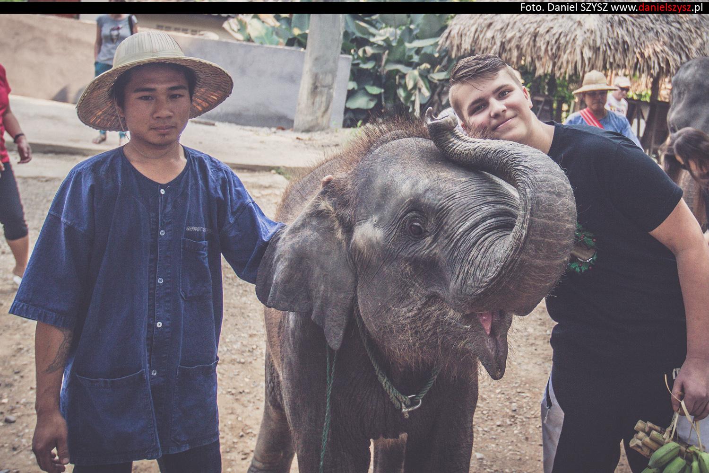 tajlandia-chiang-mai-karmienie-sloni-308