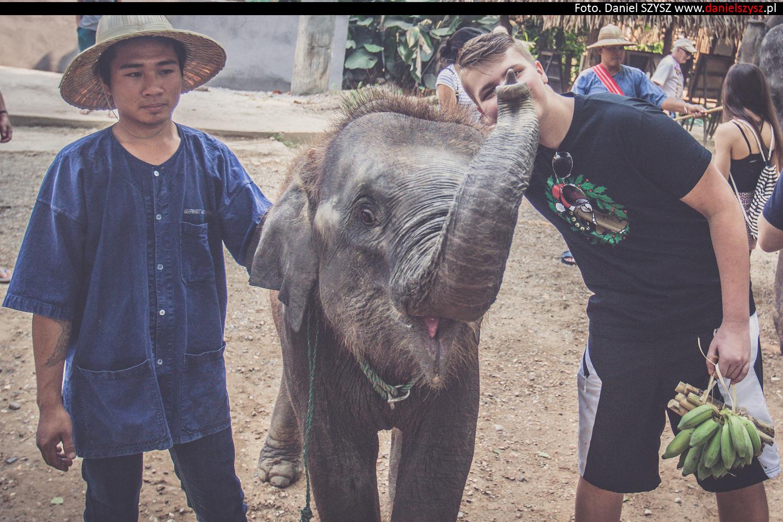 tajlandia-chiang-mai-karmienie-sloni-310