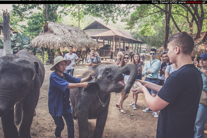 tajlandia-chiang-mai-karmienie-sloni-313