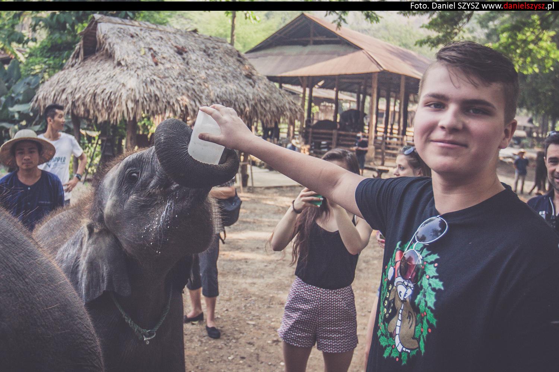 tajlandia-chiang-mai-karmienie-sloni-318