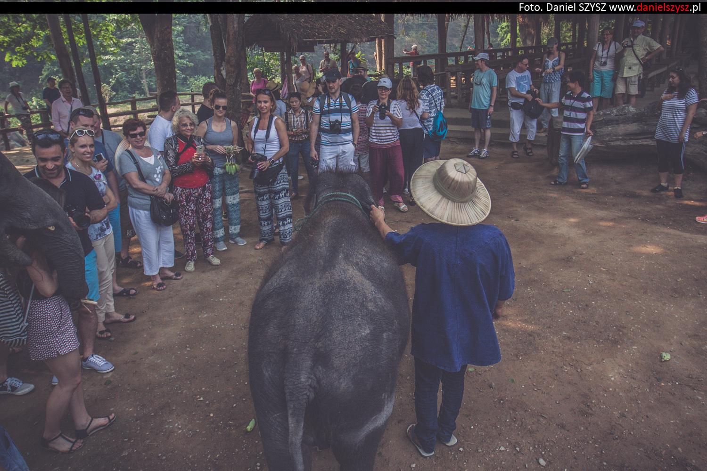 tajlandia-chiang-mai-karmienie-sloni-33