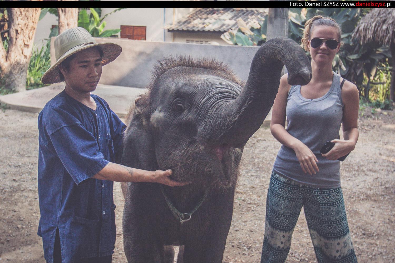 tajlandia-chiang-mai-karmienie-sloni-4