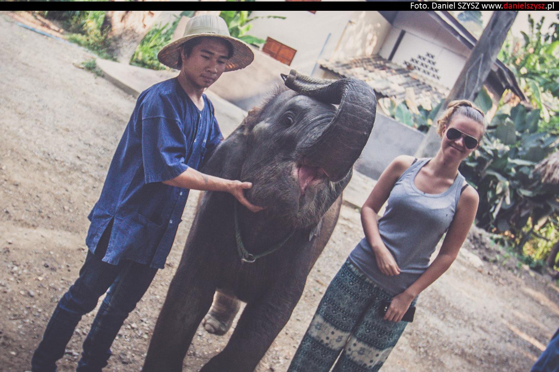 tajlandia-chiang-mai-karmienie-sloni-45