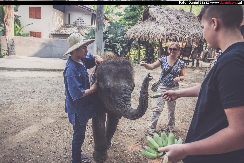 tajlandia-chiang-mai-karmienie-sloni-46