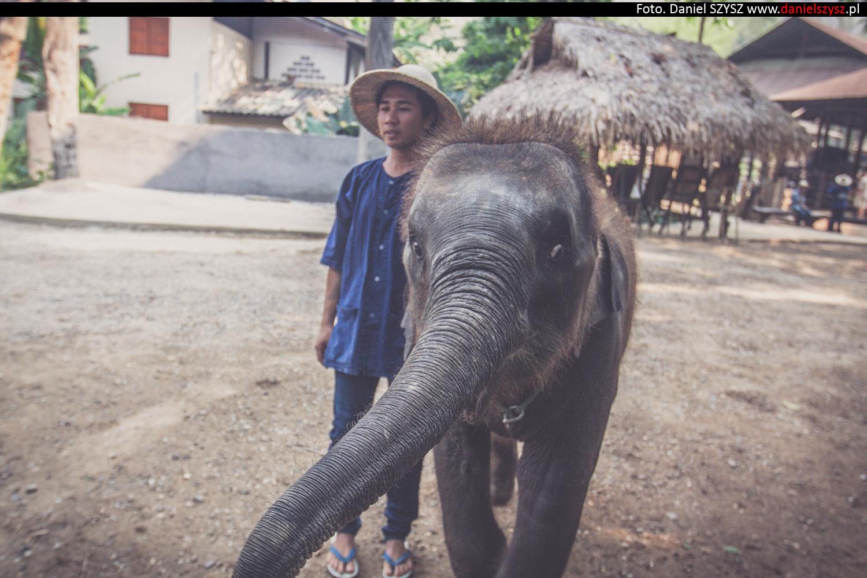tajlandia-chiang-mai-karmienie-sloni-49