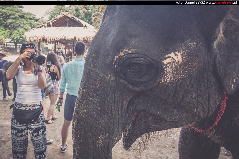 tajlandia-chiang-mai-karmienie-sloni-67
