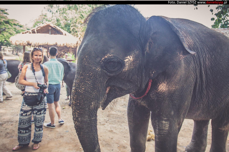 tajlandia-chiang-mai-karmienie-sloni-68