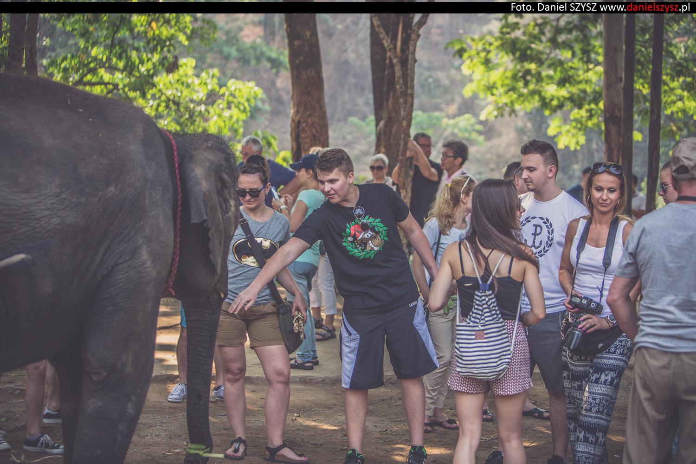 tajlandia-chiang-mai-karmienie-sloni-69