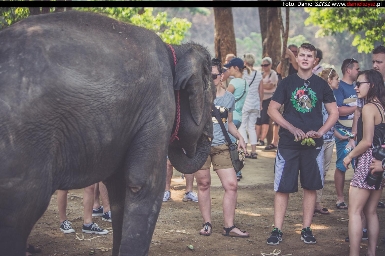tajlandia-chiang-mai-karmienie-sloni-71