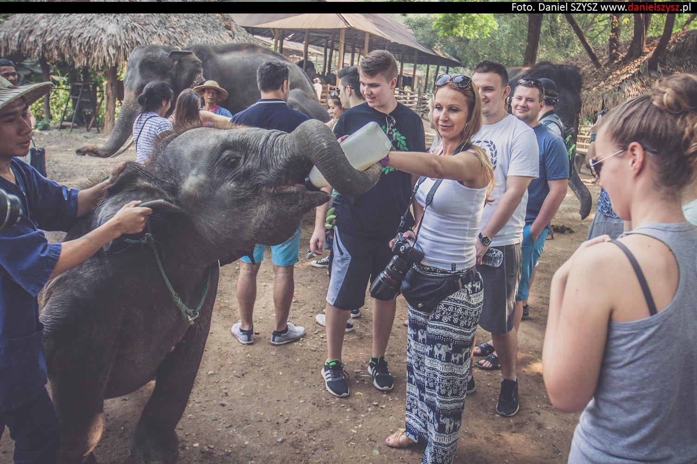 tajlandia-chiang-mai-karmienie-sloni-75