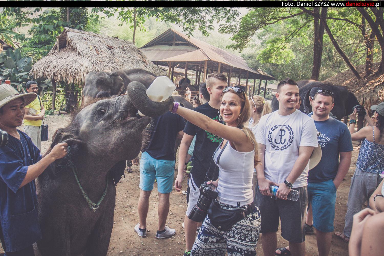 tajlandia-chiang-mai-karmienie-sloni-76