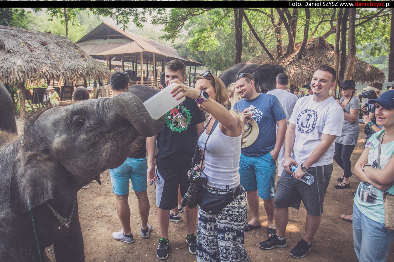 tajlandia-chiang-mai-karmienie-sloni-9
