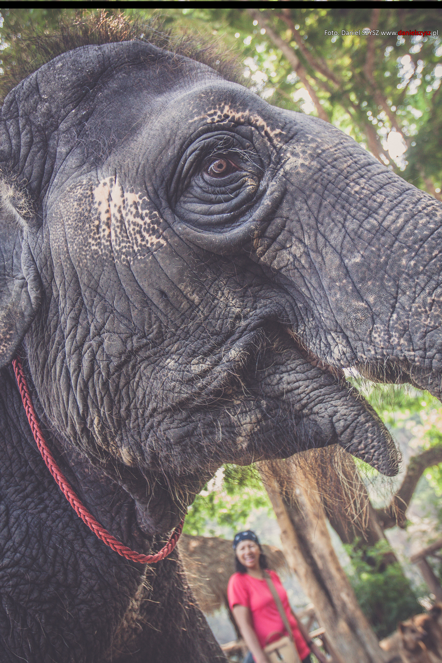 tajlandia-chiang-mai-pokazy-sloni-261