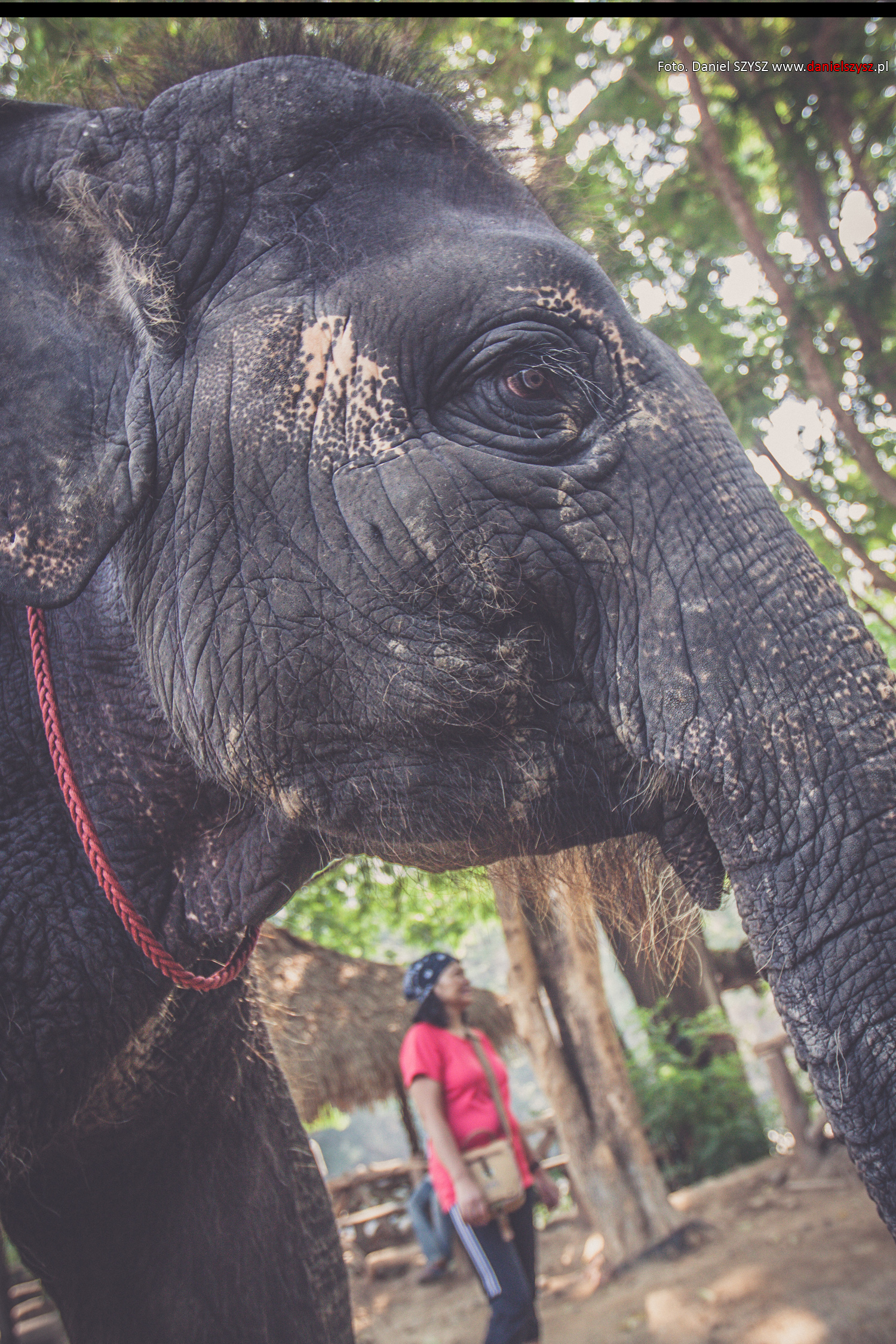 tajlandia-chiang-mai-pokazy-sloni-262