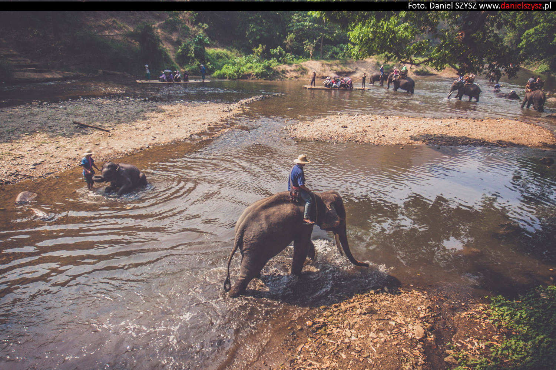 tajlandia-chiang-mai-pokazy-sloni-51