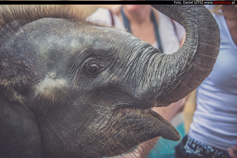 tajlandia-chiang-mai-pokazy-sloni-544