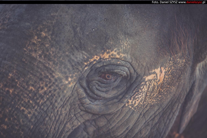 tajlandia-chiang-mai-pokazy-sloni-548