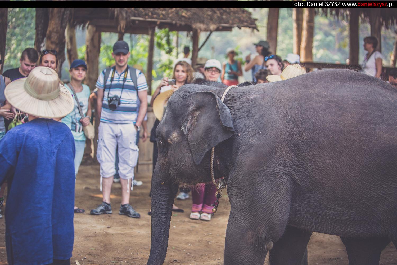 tajlandia-chiang-mai-pokazy-sloni-553