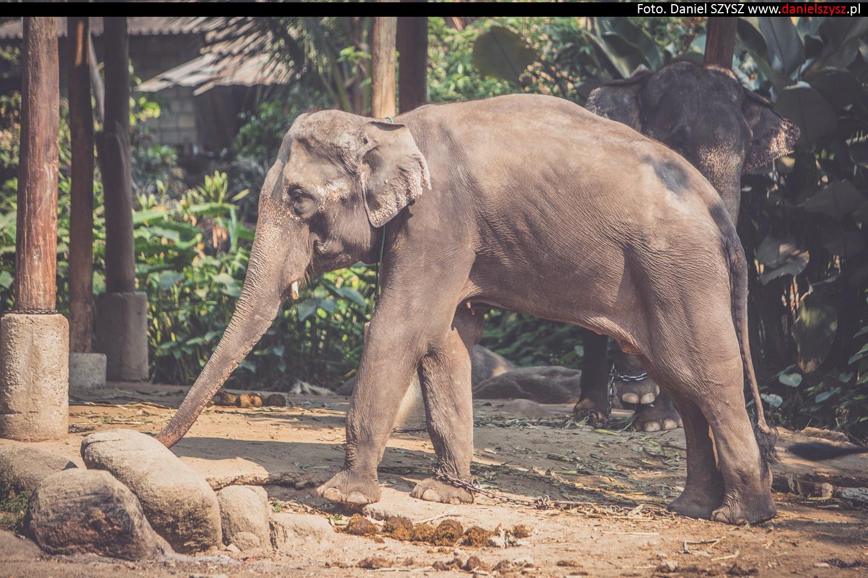 tajlandia-chiang-mai-pokazy-sloni-558