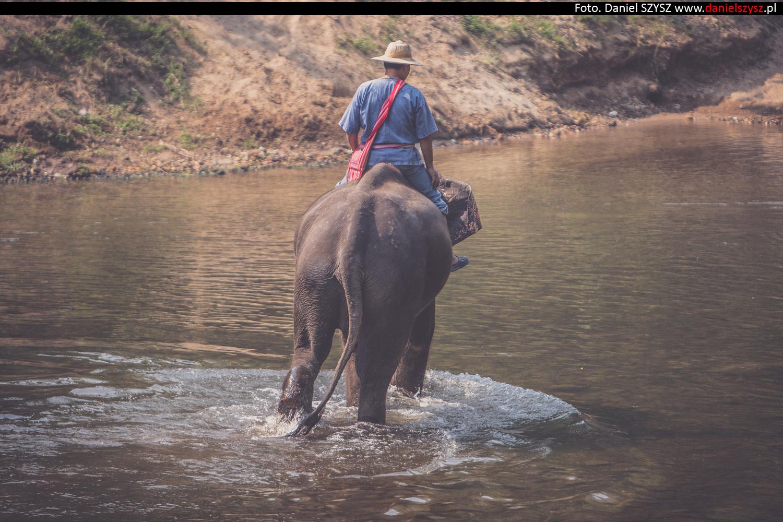 tajlandia-chiang-mai-pokazy-sloni-585