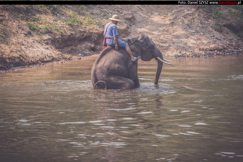 tajlandia-chiang-mai-pokazy-sloni-587