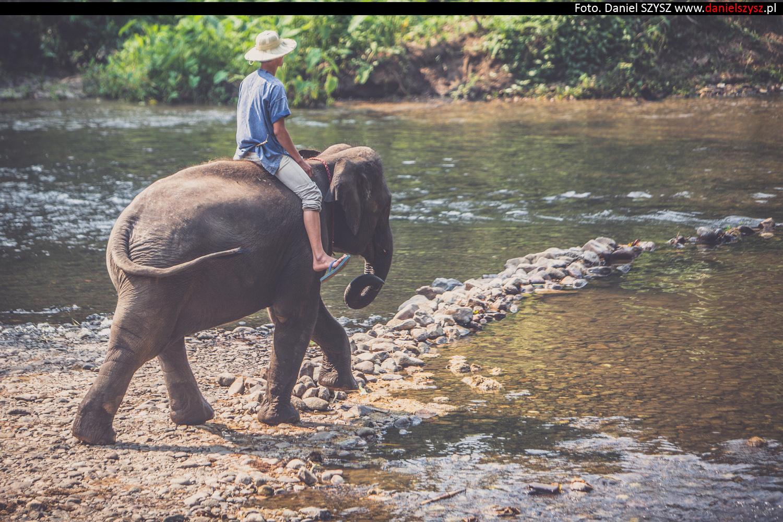 tajlandia-chiang-mai-pokazy-sloni-589