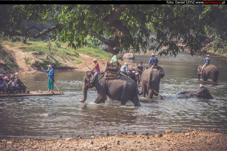 tajlandia-chiang-mai-pokazy-sloni-621