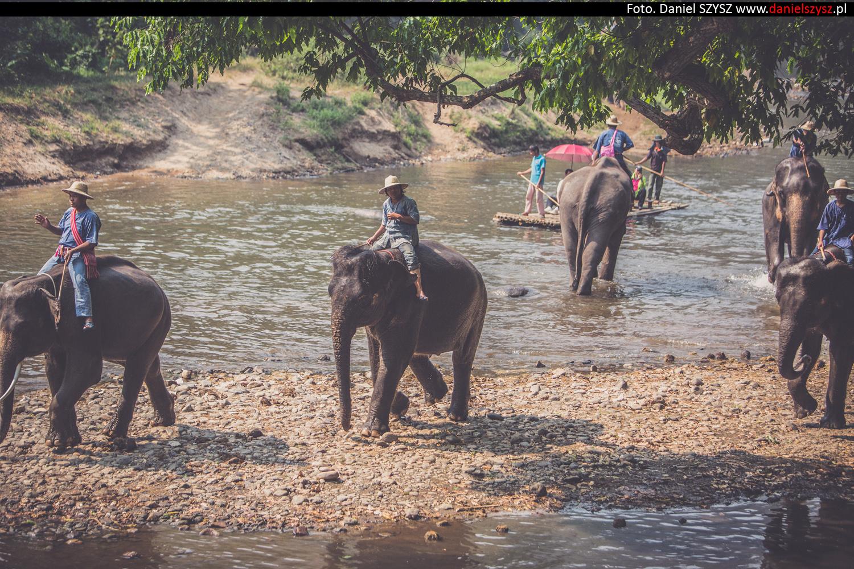 tajlandia-chiang-mai-pokazy-sloni-636
