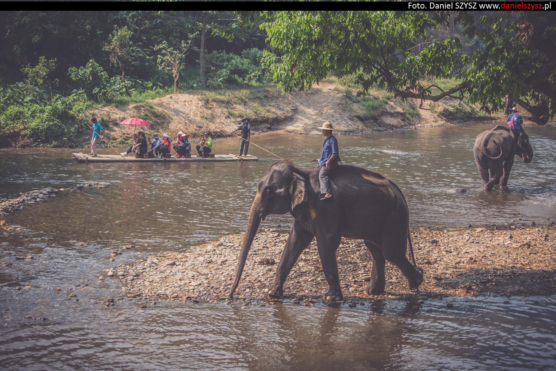 tajlandia-chiang-mai-pokazy-sloni-641