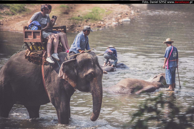 tajlandia-chiang-mai-pokazy-sloni-650