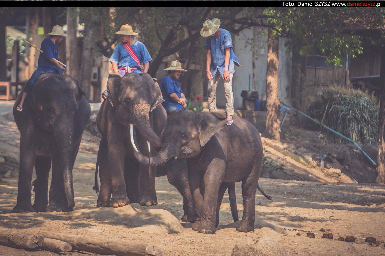 tajlandia-chiang-mai-pokazy-sloni-654