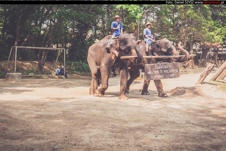 tajlandia-chiang-mai-pokazy-sloni-66