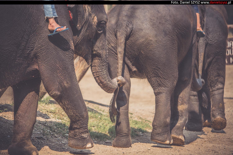 tajlandia-chiang-mai-pokazy-sloni-665