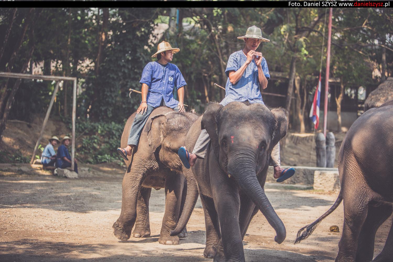 tajlandia-chiang-mai-pokazy-sloni-669