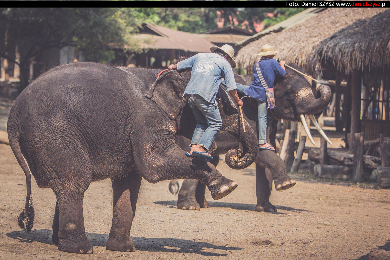 tajlandia-chiang-mai-pokazy-sloni-673