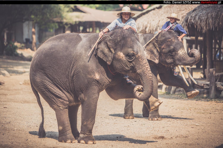tajlandia-chiang-mai-pokazy-sloni-677