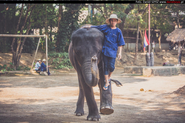 tajlandia-chiang-mai-pokazy-sloni-679