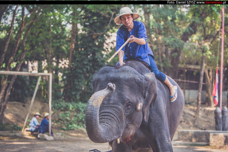 tajlandia-chiang-mai-pokazy-sloni-682