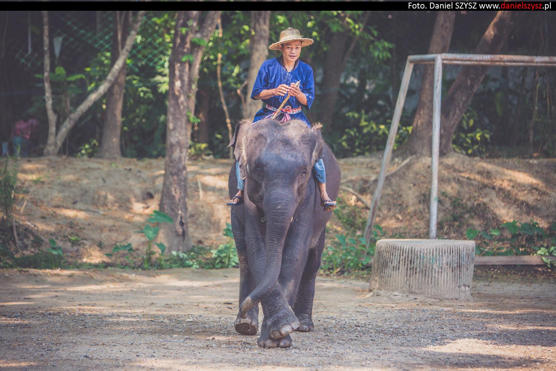 tajlandia-chiang-mai-pokazy-sloni-684