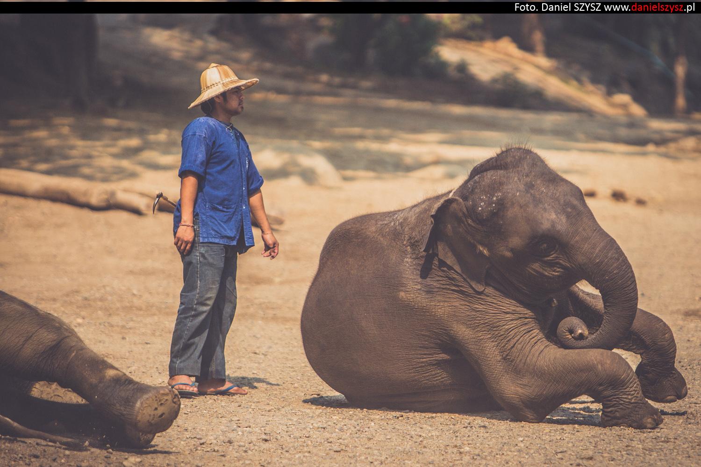 tajlandia-chiang-mai-pokazy-sloni-686